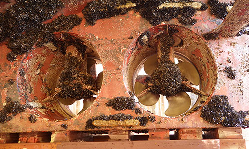 Biofouling under ship